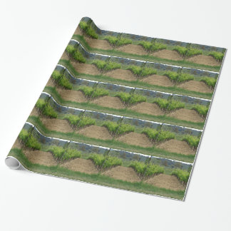Vineyard in spring . Tuscany, Italy Wrapping Paper