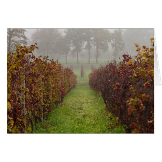 vineyard in the fog in autumn card
