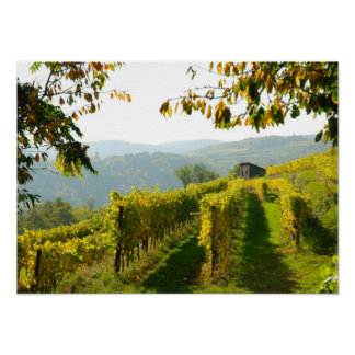 Vineyard near Krems Poster