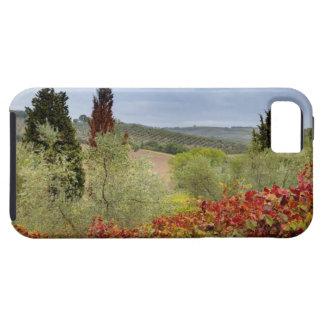Vineyard near Montalcino, Tuscany, Italy iPhone 5 Cases