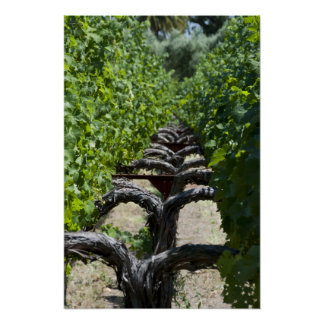 Vineyard Row of Grapes Poster