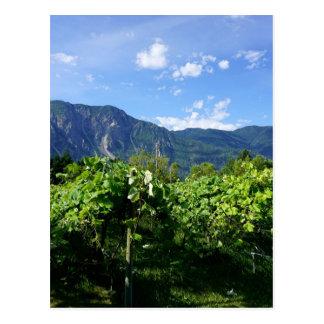 Vineyard southern BC, Canada Postcard