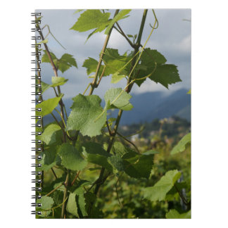 vineyard spiral note book
