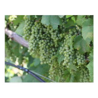 Vineyard Vines Postcard