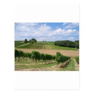 Vineyard - Vineyard (Bordeaux - France) 04 Postcard