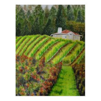 Vineyards in Healdsburg, CA  Post Card