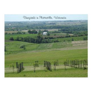 Vineyards in Platteville, Wisconsin Postcard