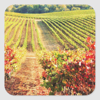 VINEYARDS.JPG SQUARE STICKER