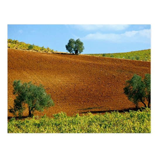 Vineyards near Montilla, Andalusia, Spain at the C Postcard