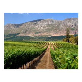 Vineyards Of Groot Constantia Wine Estate Postcard