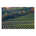 Vineyards of Russian River Valley Print