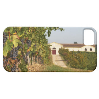 Vineyards, petit verdot vines and the winery in case for the iPhone 5