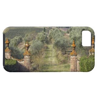 Vineyards, Tuscany, Italy iPhone 5 Cases