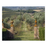 Vineyards, Tuscany, Italy Posters