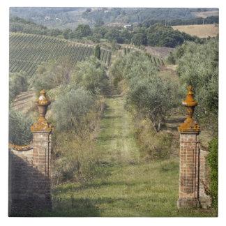 Vineyards, Tuscany, Italy Tile