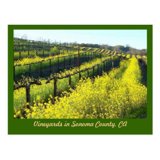 Vineyards with Mustard Seed  Post Card