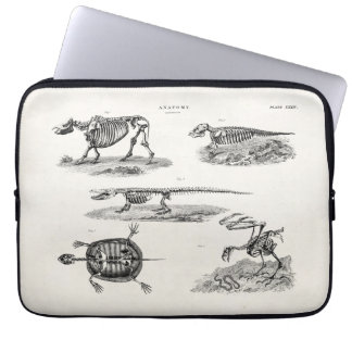 Vintage 1800s Animal Skeletons Antique Anatomy Laptop Sleeve
