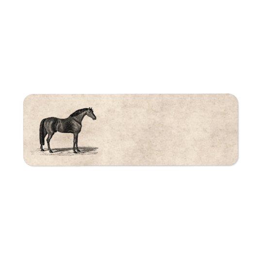 Vintage 1800s Arabian Horse Illustration - Horses
