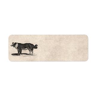 Vintage 1800s Border Collie Dog Illustration