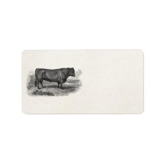 Vintage 1800s Bull Illustration Retro Cow Bulls