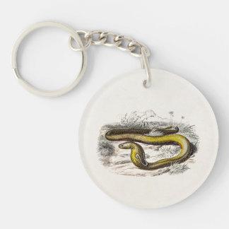 Vintage 1800s Cobra Snake Retro Cobras Drawing Keychain