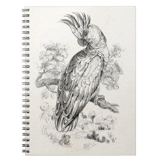 Vintage 1800s Cockatoo Parrot Bird Cockatiel Birds Notebooks
