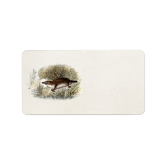 Vintage 1800s Duck Bill Platypus Illustration Label