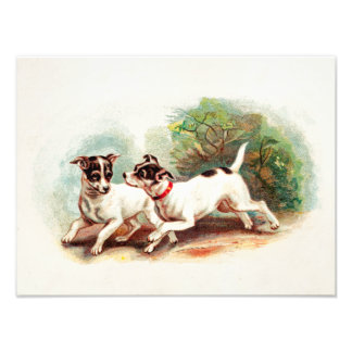 Vintage 1800s Fox Terrier Dogs - Terriers Template Photo Print