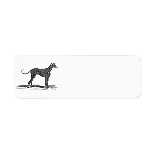 Vintage 1800s Greyhound Dog Illustration - Dogs