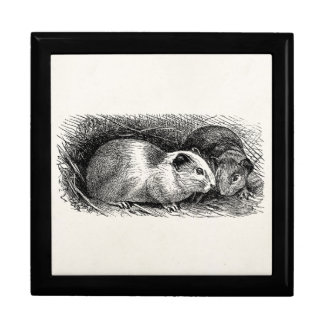 Vintage 1800s Guinea Pig Illustration Retro Cavies Gift Box