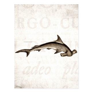 Vintage 1800s Hammerhead Shark Old Hammer Head Postcard