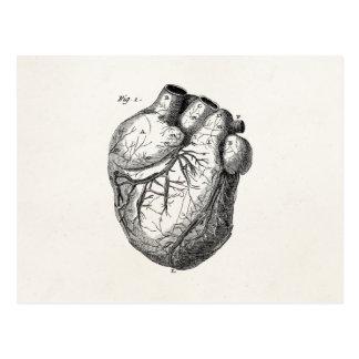 Vintage 1800s Heart Retro Cardiac Anatomy Hearts Postcard