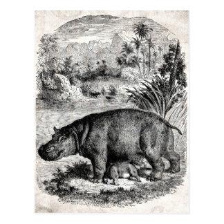 Vintage 1800s Hippo w Baby Retro Hippos Template Postcard