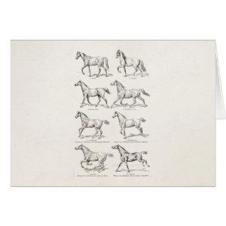 Vintage 1800s Horse Gaits Illustration Horses Card
