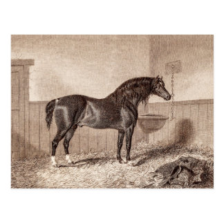 Vintage 1800s Horse Norfolk Cob Hackney Retro Postcard