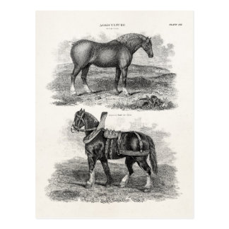 Vintage 1800s Horse Retro Agricultural Horses Postcard