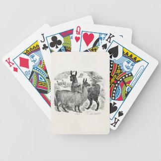 Vintage 1800s Llama Retro Llamas Alpaca Template Poker Deck