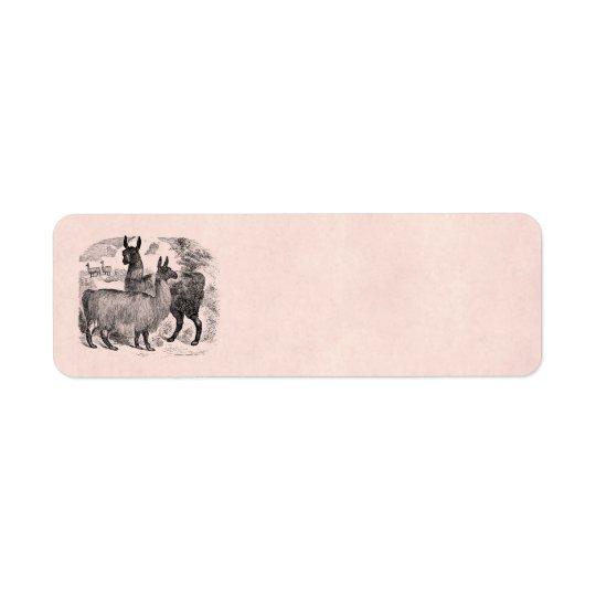 Vintage 1800s Llama Retro Pink Llamas Template Return Address Label