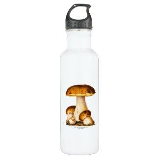 Vintage 1800s Mushroom Edible Mushrooms Template 710 Ml Water Bottle