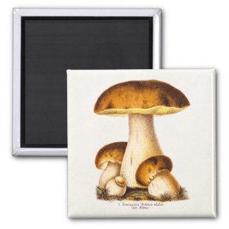 Vintage 1800s Mushroom Edible Mushrooms Template Fridge Magnets