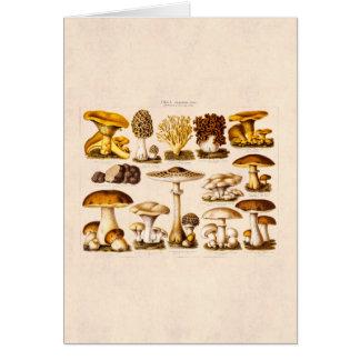 Vintage 1800s Mushroom Variety  Mushrooms Template