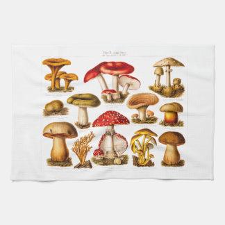 Vintage 1800s Mushroom Variety Red Mushrooms Kitchen Towel