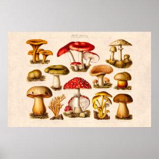 Vintage 1800s Mushroom Variety Red Mushrooms Print