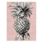 Vintage 1800s Pineapple Illustration Pink Postcard