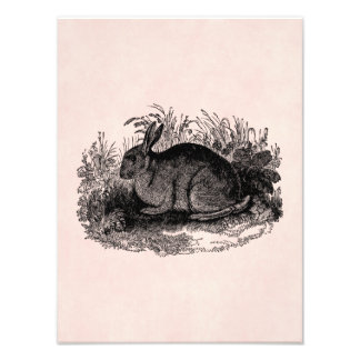 Vintage 1800s Rabbit Retro Bunny Template Rabbits Photo Print