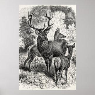 Vintage 1800s Red Deer Illustration Stag Doe Fawn Print