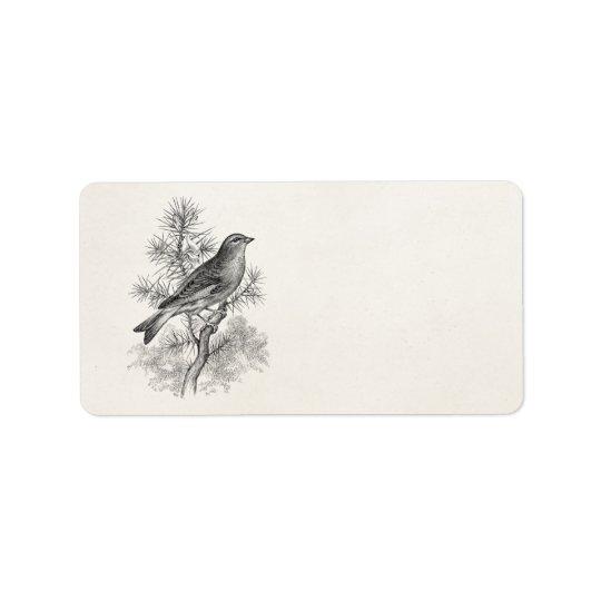 Vintage 1800s Rose Linnet Song Bird Finch Birds