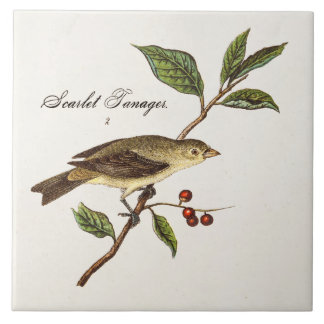 Vintage 1800s Scarlet Tanager Bird Songbird Birds Tile