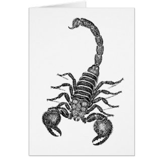 Vintage 1800s Scorpion Illustration - Scorpions Card