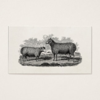 Vintage 1800s Sheep Ewe Illustration Retro Farm Business Card